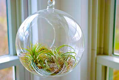 Advantages Of Terrariums Terrarium Gardening
